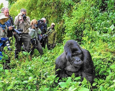 Experience the amazing Gorilla Trek of Rwanda
